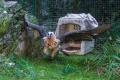 Noví orlosupi bradatí byli vypuštěni do venkovní voliéry. Starý pár, žijící v pražské zoo přes 40 let, byl přesunut do prostorné voliéry v zázemí.