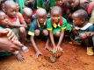 Sázení stromů moringa v oblasti Dja v Kamerunu