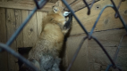 Klopotovice, Syrovice, Dolní Cerekev, Jiříkovice, Křižanovice, Vítejeves… Tam všude se nalézají kožešinové farmy, kde žijí (a umírají) zvířata v otřesných podmínkách.