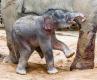 Janitino první mládě jen chvíli poté, co se od matky poprvé napilo.