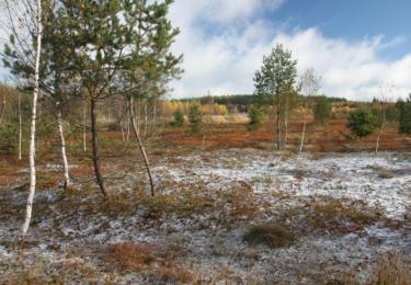 Krásenské rašeliniště po vyřezávce-  2016