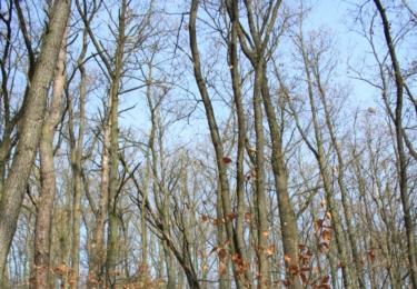 Bukový les při cestě do Svatého Jana pod Skálou