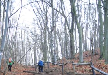 Kořenové schody na Skálu