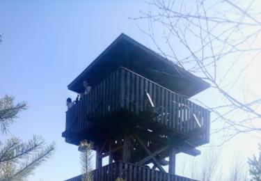 Vyhlídková věž na rašeliništi