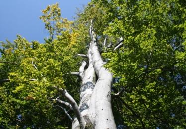 Majestátní bul lesní, který nám zkřížil cestu