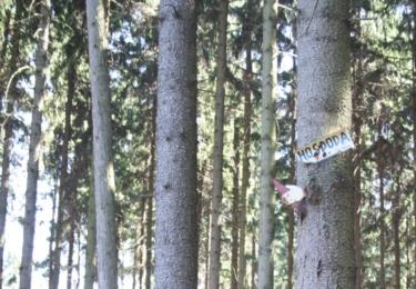 V lese je důležité udržovat správný směr