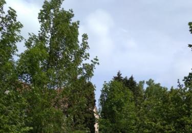 Dům hrůzy ukrytý za stromem