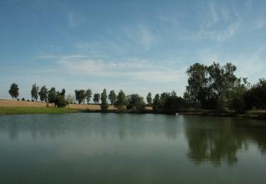 Rybník u Červeného Újezdu