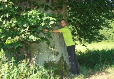 Poutník v objetí s 350 let starou lípou