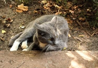 Kočky jsou u zahrádkářů spokojené