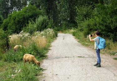 Fotíme zaběhnuté ovce