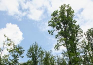 Lesy u Bílovic
