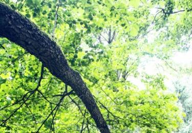 Strom a řeka - Bílovice na Svitavou