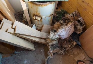 """""""Kromě tygra jsme při domovní prohlídce na Českolipsku nalezli v objektu více něž 20 zamražených těl dalších chráněných živočichů, tělo káněte, ledňáčka, puštíka, poštolky obecné nebo bobra,"""" uvádí policejní tisková zpráva."""