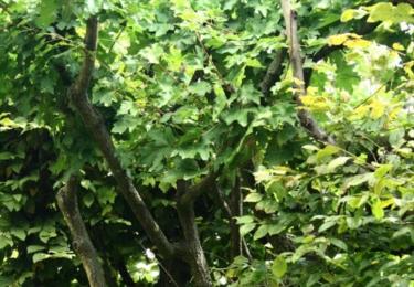 Veverka v zámeckém parku