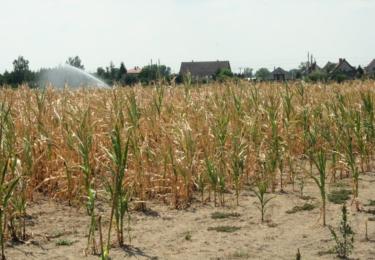 Sucho je patrné po celé republice