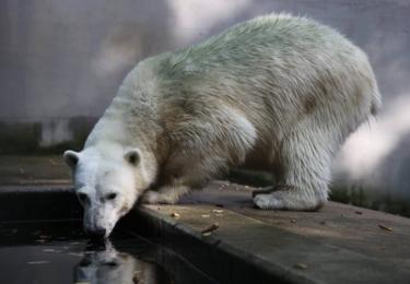 Norinka v brněnské Zoo