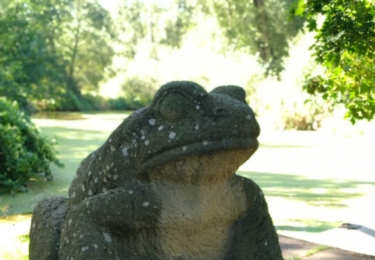 Okrasa parku - kamenná žába