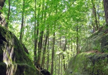 Cesta do Příhrazských skal
