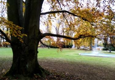 Zámecký park se sekvojovci