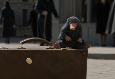 Hrabák. Fantastická zvířata: Grindelwaldovy zločiny. Foto Warner Bros. Pictures