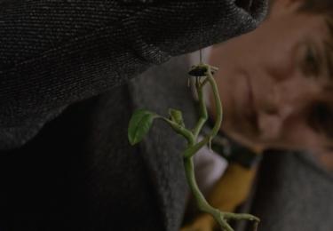 Mlok s kamarádem kůrolezem. Fantastická zvířata: Grindelwaldovy zločiny. Foto Warner Bros. Pictures