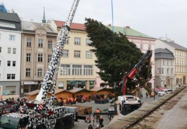 Ze zakrslé jedličky se vyklubala douglaska, teď zdobí náměstí, foto Blanka Martinovská