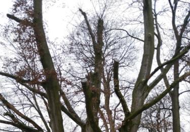 Majestátní, ale uschlý strom