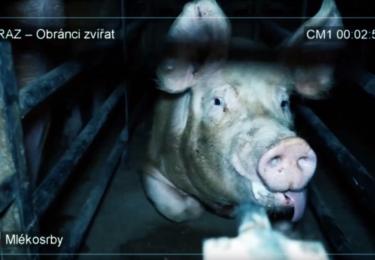 Snímek z otřesného videa OBRAZu; ty nejhorší záběry jsme ale nezvolili