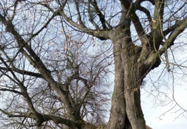 Krásný strom