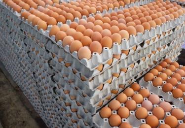 3 a půl milionu vajec staženo z prodeje - salmonela, foto MZČR