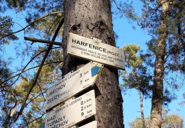 Harfenice