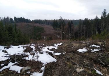 Smutný pohled - les po polomu