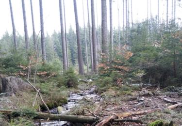 V lese pod Mrtvým mužem