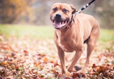 Foto Útulek pro nalezené psy v Táboře