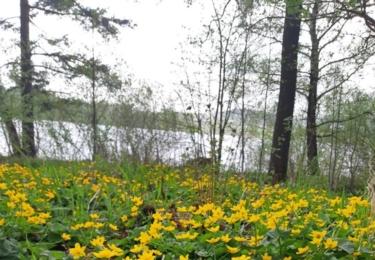 Kvetou již blatouchy. Foto Facebook TS Lipenska