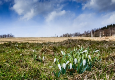 Kvetou již sněženky. Foto Facebook TS Lipenska