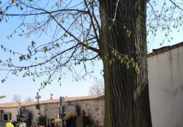 Lavička na hřbitově u kostela na Strážišti