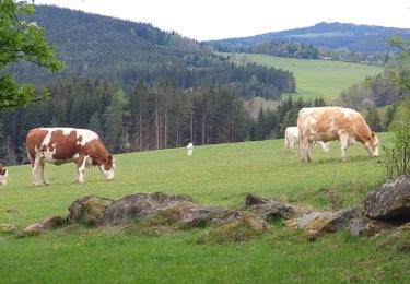 Krajina u Cudrovic