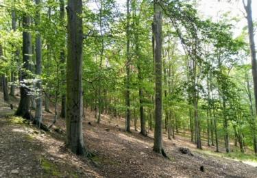 Lesy budoucnosti