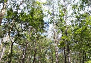 Cesta lese, kde kdysi byl německý výcvikový prostor
