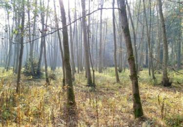 Klokočský les