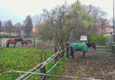 Jsme na vsi, koně jsou samozřejmostí
