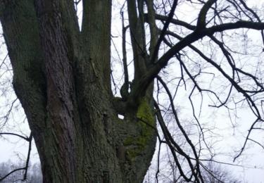 Starobylý strom