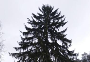 Vánoční strom Evžena Drozda