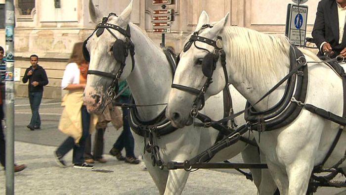 Praha koně