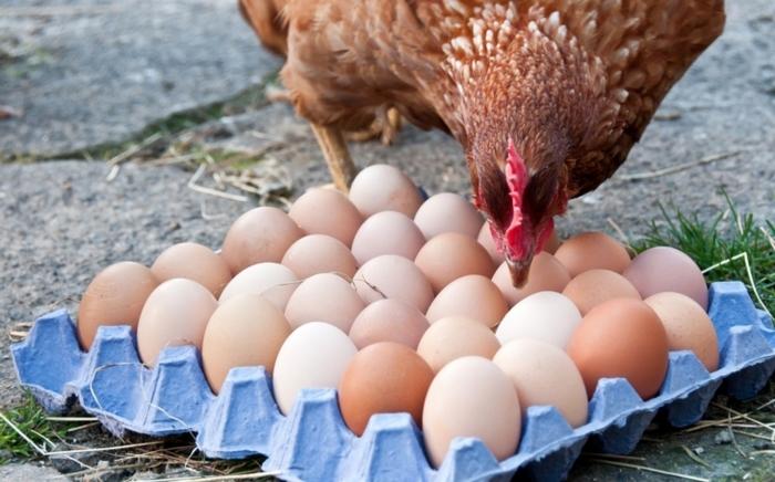Spotřebitelům dnes neni jedno, za jakých podmínek se potraviny produkují