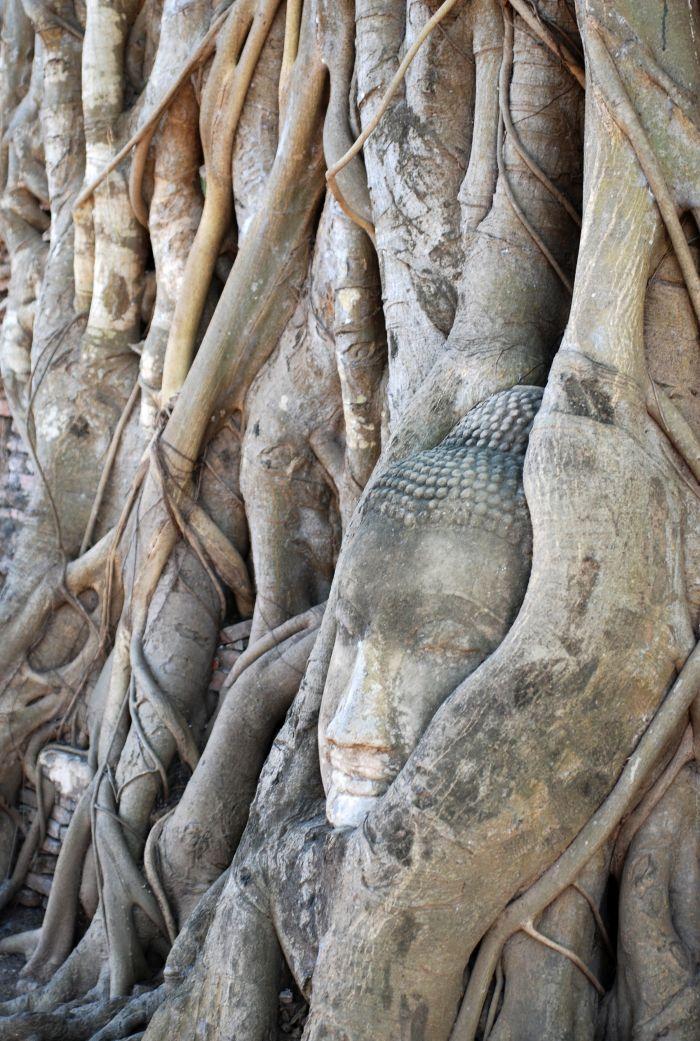 Legendární hlava Buddhy v kořenech stromu poblíž chrámu Wat mahathat