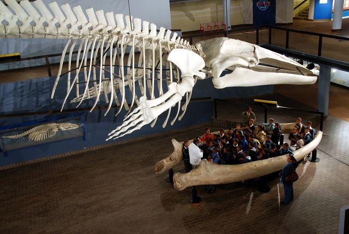 Iziko South African Museum - do čelistí plejtváka se vejde celá školní třída