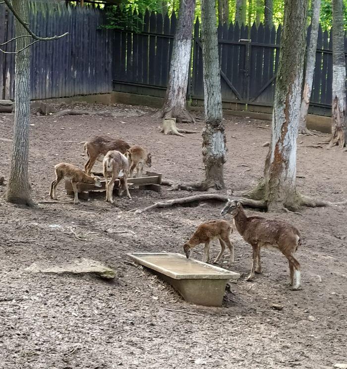 Zookoutek Malá Chuchle
